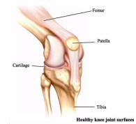 Коленный сустав - анатомия коленного сустава
